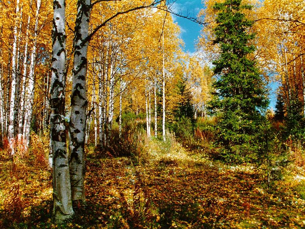 Картинки осеннего леса скачать бесплатно